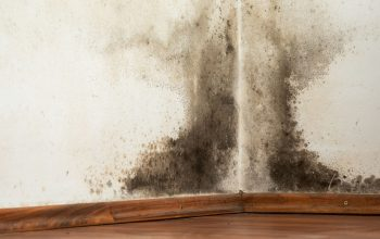 Get Rid of Mold for Good